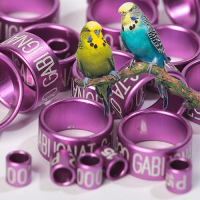 Canary rings (aluminium) color