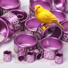 Canary rings (aluminium) color PURPLE