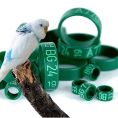 Parrot rings Plastic