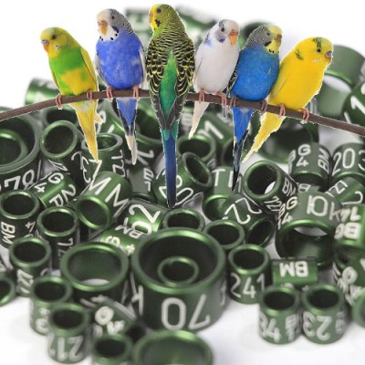 Rings for parrots, budgies